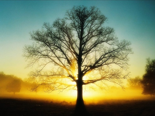Square beautiful sunrise tree sun dawn 1600x1200 wallpaper